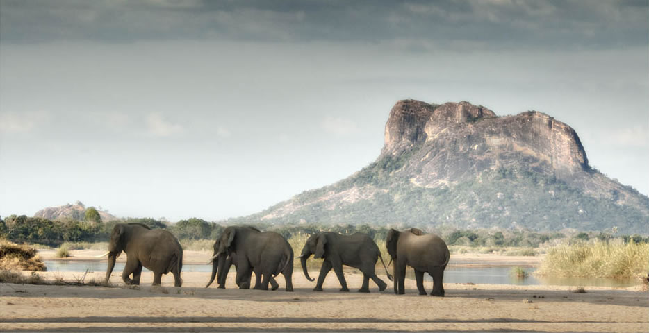 Elephants & mountain